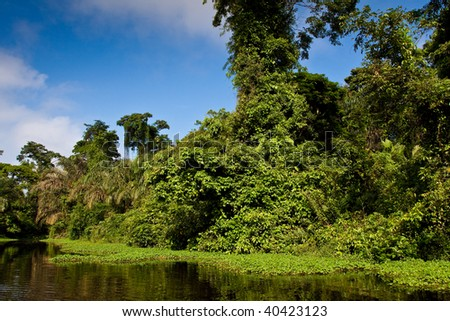 A river and beautiful trees in a rainforest