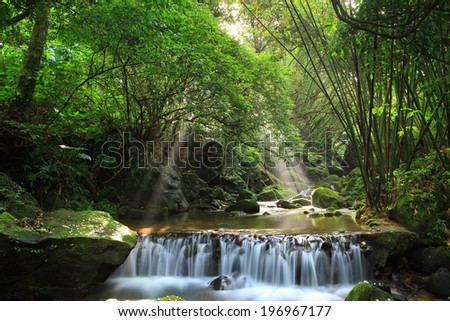 A river flowing through a dense forest during the day.