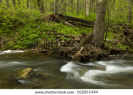 A river in the woods during spring.