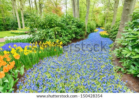 A river of blooming grape muscari (hyacinth) flowers among trees and tulips at an outdoor park at springtime. - stock photo