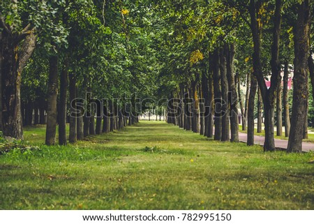 A road between trees with multiple leaves in a summer sunny day, Belarus