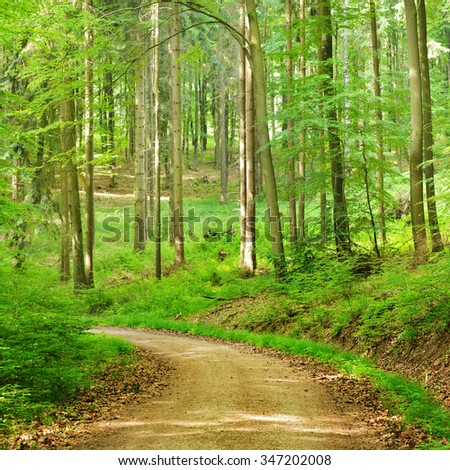 A road in a beech tree forest in Germany - stock photo