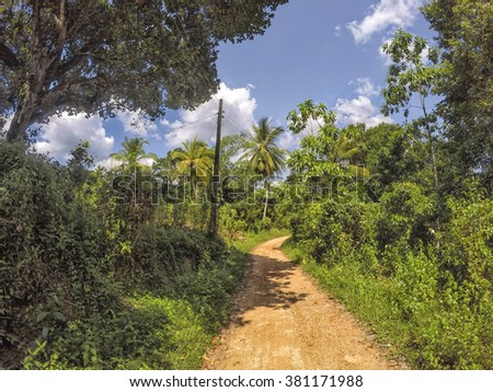 A road in the green jungle of Sri Lanka in the Indian Ocean leads in the wilderness and passing tropical plants and coconut palm trees - stock photo