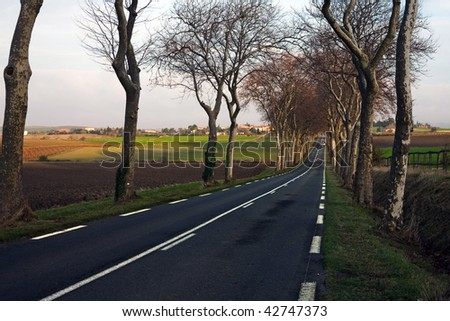 A road surrounded by trees - stock photo