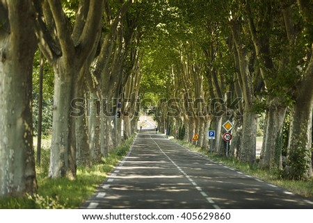 a road that has both sides sycamore tree (Platanus tree) - stock photo