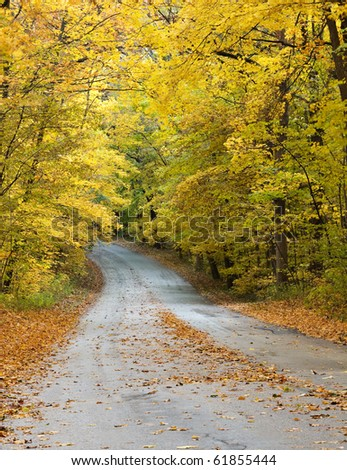 A road winds through a forest in autumn