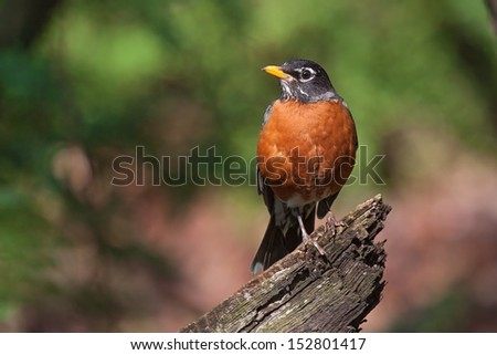 a robin sits on top of a fallen branch.
