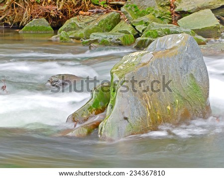 A rock covered with moss.  - stock photo