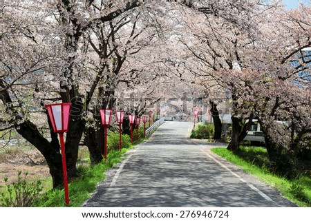 A romantic archway of beautiful cherry blossoms ( Sakura Namiki ) over a country road in Maniwa, Okayama, Japan ~ Spring scenery of idyllic Japanese countryside - stock photo