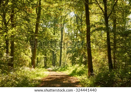 A romantic forest path shines in bright sunshine.