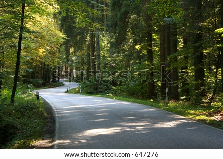 A romantic road through a forest - stock photo
