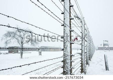 A rose on the Barbed Wire Fence in the snow covered concentration camp of Auschwitz  Birkenau, Poland - stock photo