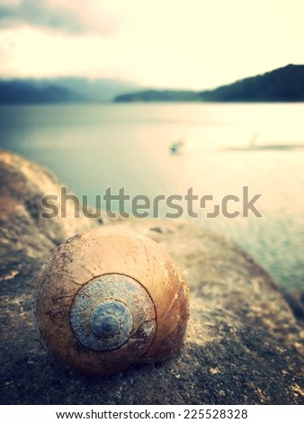 A round object with spiral markings sitting on a rock by the water. - stock photo