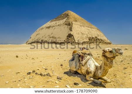 A row of camels transport tourists in front of all of the Dakshur Pyramids in Cairo, Egypt - stock photo