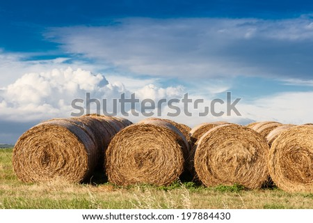 A row of hay bales on a field after havest with blue cloudy sky. Location: near Siena, Tuskany, Italy.