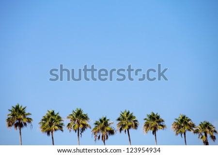 A row of palm trees over a blue sky with plenty of negative space. - stock photo