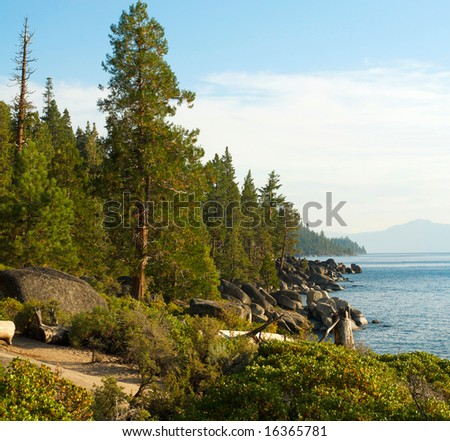 A row of tall pines trees stands along the rocky shore line of Lake Tahoe with mountains in the background