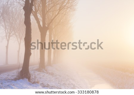 A row of trees on a foggy morning at sunrise. A typical image from the historic Beemster polder in The Netherlands. - stock photo