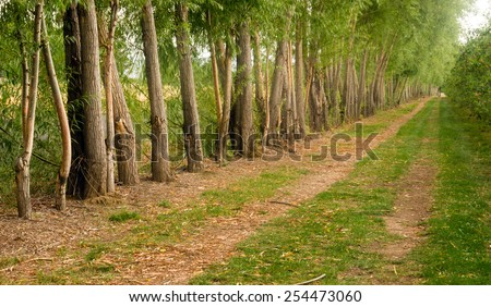 A row of trees was planted to protect farmer's field from wind erosion - stock photo