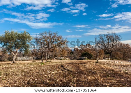 a rural and barren landscape with some mediterranean trees - stock photo