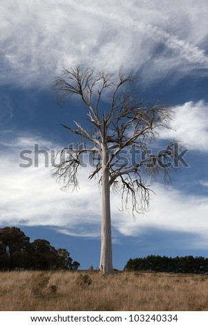 A rural landscape with dead tree. Near Oberon. New South Wales. Australia. - stock photo