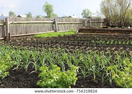 Rustic Kitchen Garden Spring Russian Village Stock Photo (Royalty ...