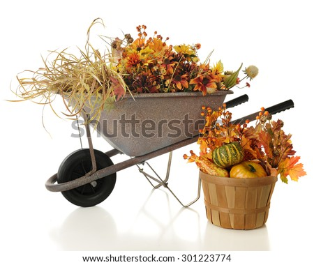 A rustic wheelbarrow full of colorful full foliage.  A basket with gourds and leaves sits nearby.  On a white background. - stock photo