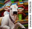 A sacred Hindu cow statue at the Sri Mariamman Temple in Chinatown, Singapore - stock photo
