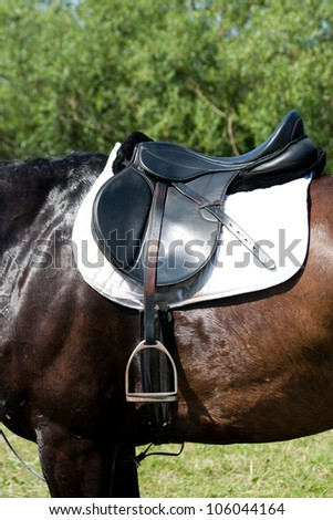 A saddle saddled on the back of a sport horse.