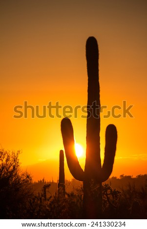 A saguaro cactus silhouetted against a sunset.  Lost Dutchman State Park, Apache Junction, AZ, USA. - stock photo