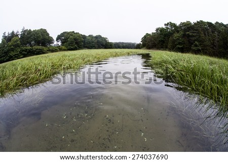 A salt marsh thrives in a shallow bay on outer Cape Cod, Massachusetts. Marshes are ecologically vital to the environmental health of this region. They are habitat for a wide diversity of life. - stock photo