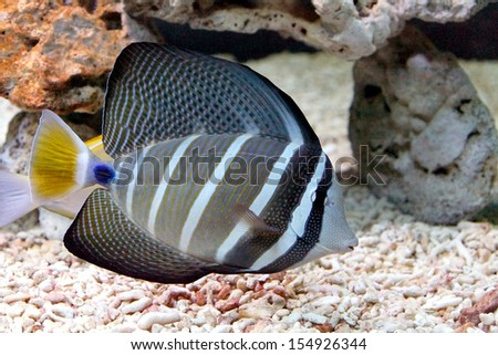 A saltwater fish - stock photo