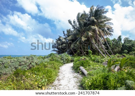 A sand path leads through Half Moon Caye, a World Heritage Site, near the famous Blue Hole off of Belize in the Caribbean Sea. The caye is a sanctuary for boobies and frigate birds. - stock photo