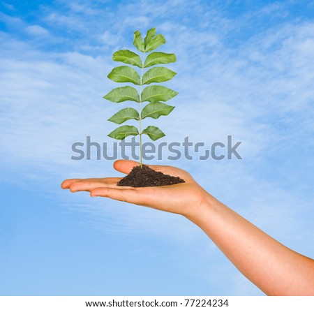 A sapling in hand as a symbol of nature protection - stock photo