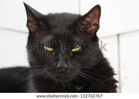 A Scary Black cat Hanging Around Waiting to be Fed