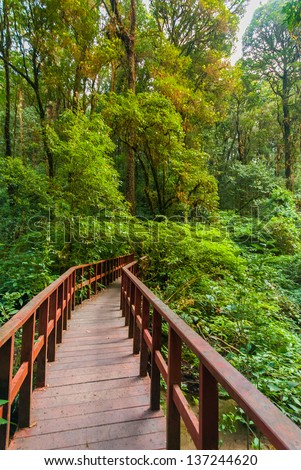A scene looking and walk path straight into a dense tropical rain forest - jungle - Walking trail in tropical forest - Jungle forest scenic background - stock photo
