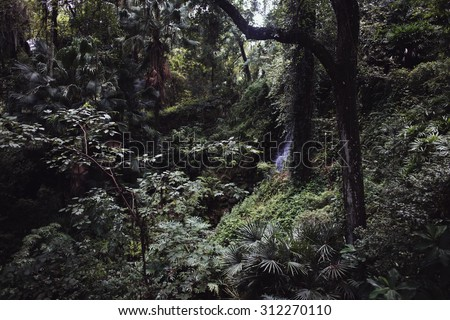 A scene looking straight into a dense tropical rain forest, matte filter and soft lighting. A waterfall just peeking through the foliage  - stock photo