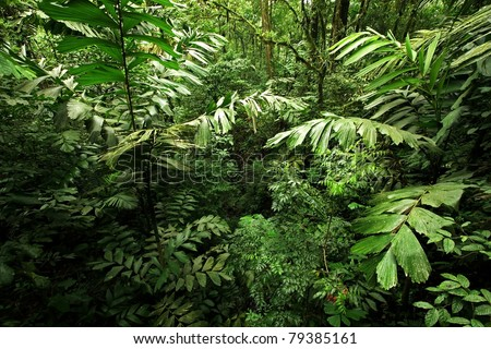 A scene looking straight into a dense tropical rain forest, taken in Costa Rica - stock photo