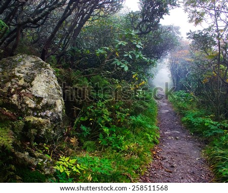 A scenic path in the Craggy Gardens area of the Blue Ridge Mountains in Western North Carolina. - stock photo