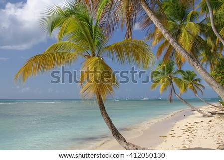 A scenic view of the coral reef tropical beach - landscape