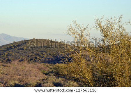 A scenic view of the magnificent desert hills at McDowell Mountain Regional Park in Arizona, in the golden light of late afternoon. - stock photo