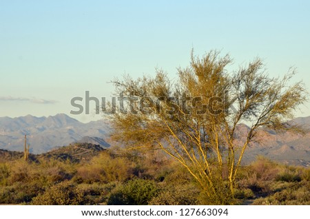 A scenic view of the magnificent desert surrounded by mountain peaks, at McDowell Mountain Regional Park in Arizona, with a single tree glowing in golden light. - stock photo