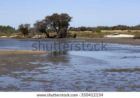 A scenic  view of the marshy  end of the    Leschenault Estuary   conservation park near Australind Western Australia on a calm day in early summer as the tide is receding.