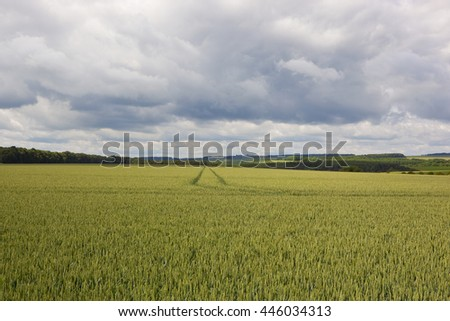 a scenic wheat field with views of the yorkshire wolds under a dramatic sky in summer