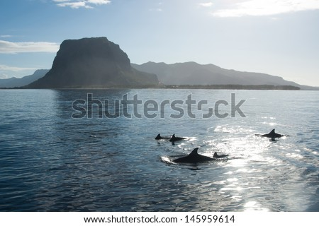 a school of dolphins playing in the clear water of the Indian Ocean in the picturesque backdrop of mountains and sunrise - stock photo