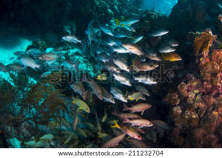 A school of fish hiding in a crevice in the reef - stock photo