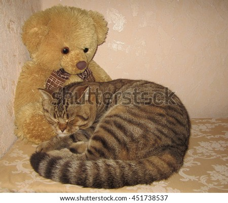 A scottish straight cat is sleeping on a toy bear.