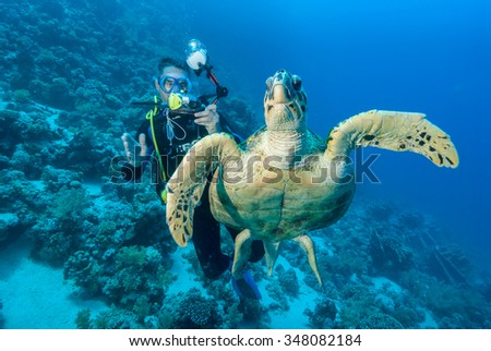 A SCUBA diver getting up close to a noble looking Hawksbill sea turtle - stock photo
