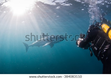 A scuba diver getting video footage of a great white shark when swimming up close in open water - stock photo