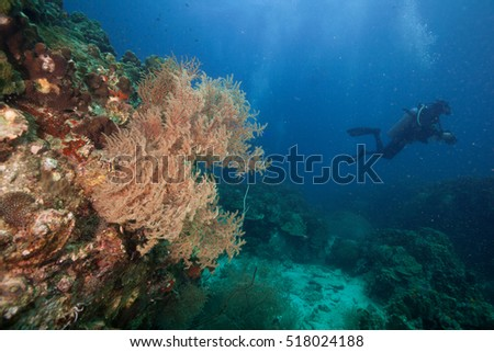 A scuba diver swimming away from a sea fan